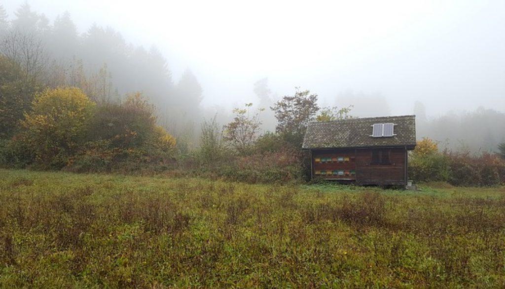 Stuga skog, miljö